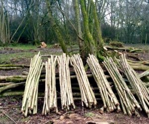 Forestry Management and Biomass Fuels