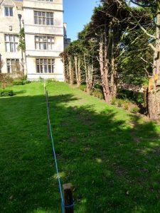 Grass Germinated at Rose Garden
