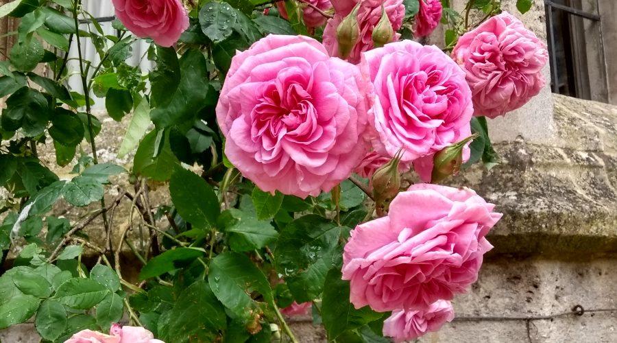 Garden Blog | June