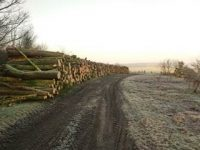 Woodchip Stock, Dibbins Wood