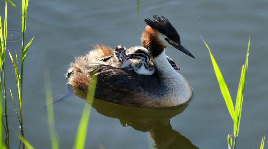 Bird Blog – July