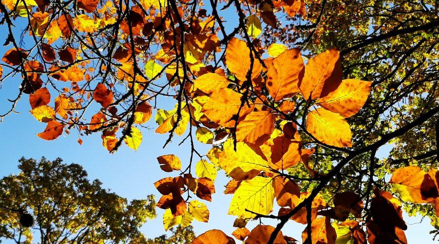 Garden Blog | November