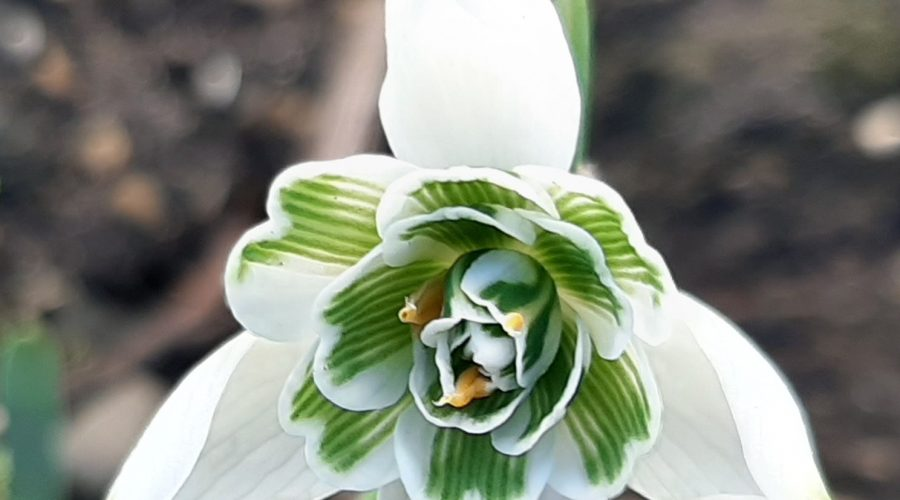 Garden Blog | January 2020