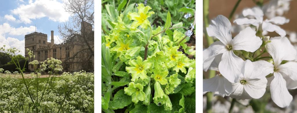 May Garden Blog Photo Collage